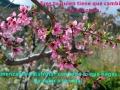 flores-frase-cambiar-syp