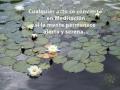 lotos-meditacion-frase-alf-syp