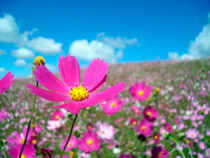 campo-con-flores_peq