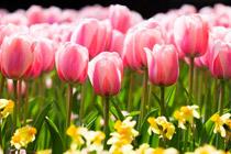 naturaleza-viva-flores_peq