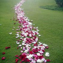 rosas-felicidad
