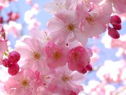 flores-bonitas-web