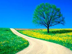 Estrada_primavera