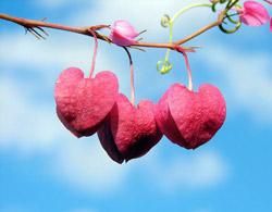 hojas-corazon