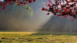 foto-arboles-web