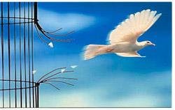 paloma-libertad