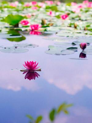Meditacion sanacion y paz for Meditacion paz interior